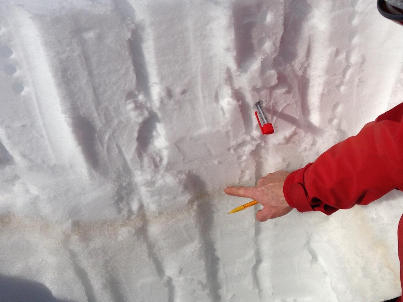 Neve Amica